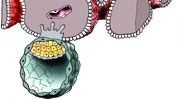 Uhnízdění, nidace, implantace oplod. vajíčka - obrázek