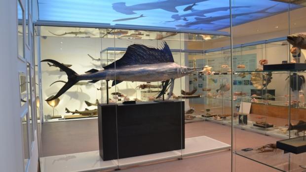 Národní muzeum - Poznejte fascinující svět živočišné říše na nové výstavě Archa Noemova! - obrázek