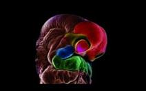 Méně používané metody asistované reprodukce - obrázek